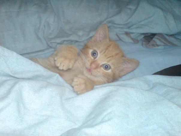 Cecilia Cat