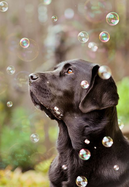 dog photo in bubbles © Jessic Keating Photography
