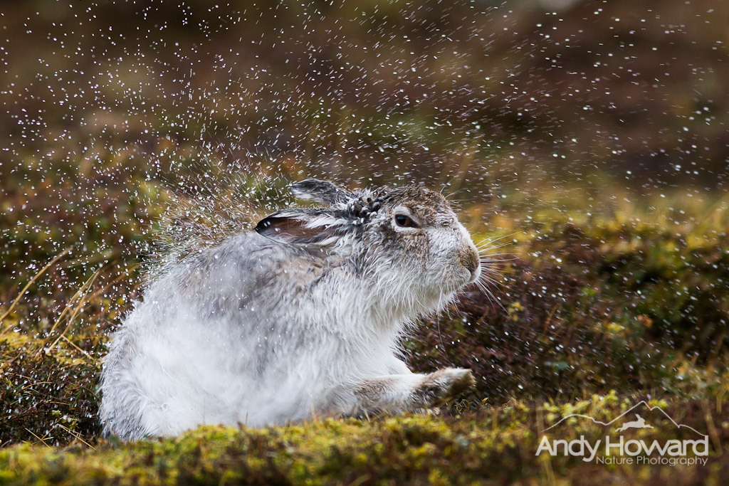 Andy Howard - Exploding Hare