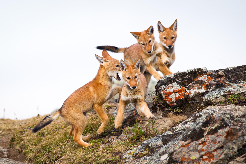 Will Burrard Lucas Wildlife Photography Tips