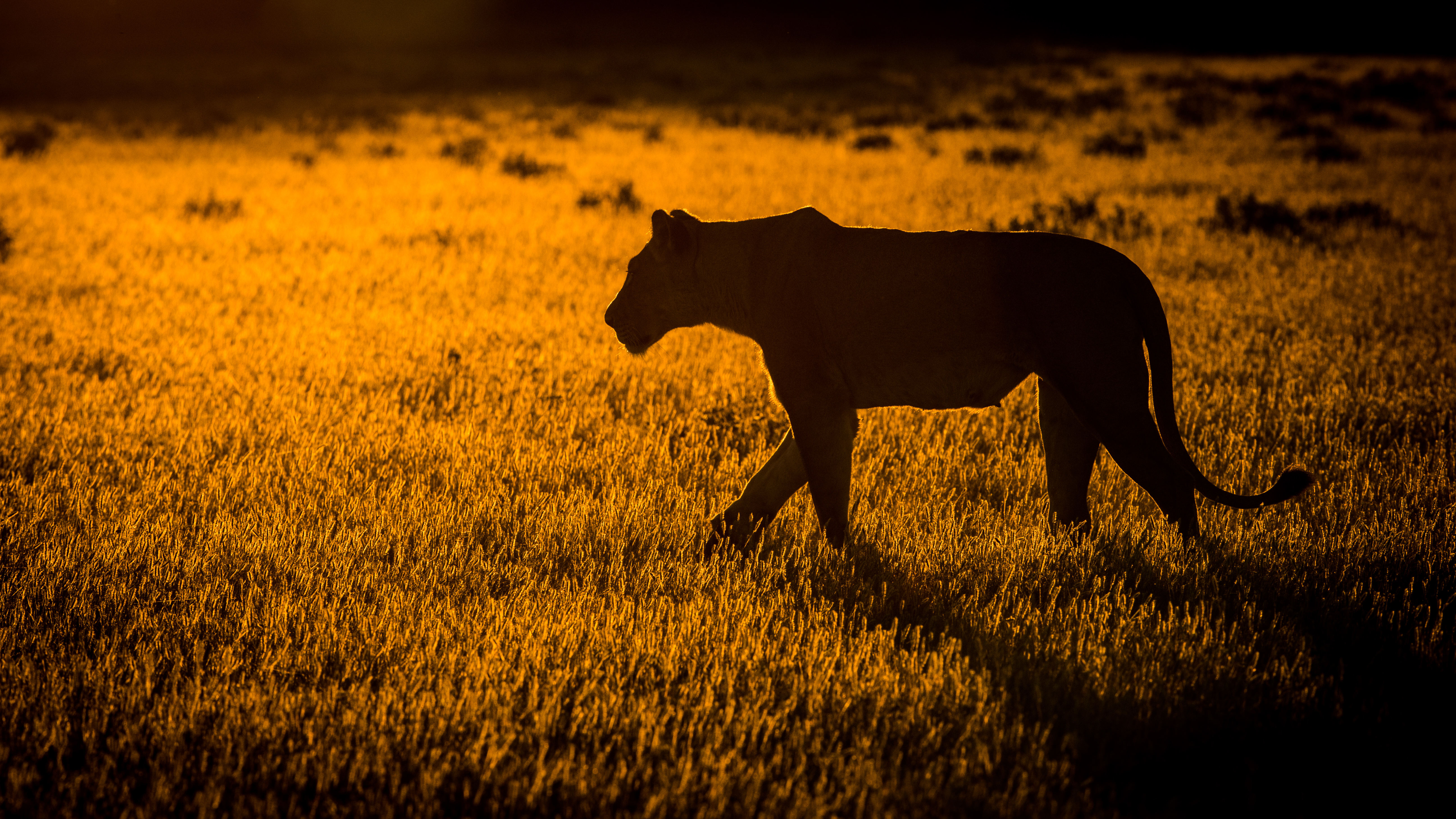 Will Burrard Lucas Wildlife Photography tips