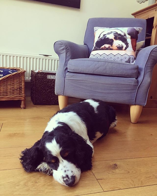 personalised cushion with dog