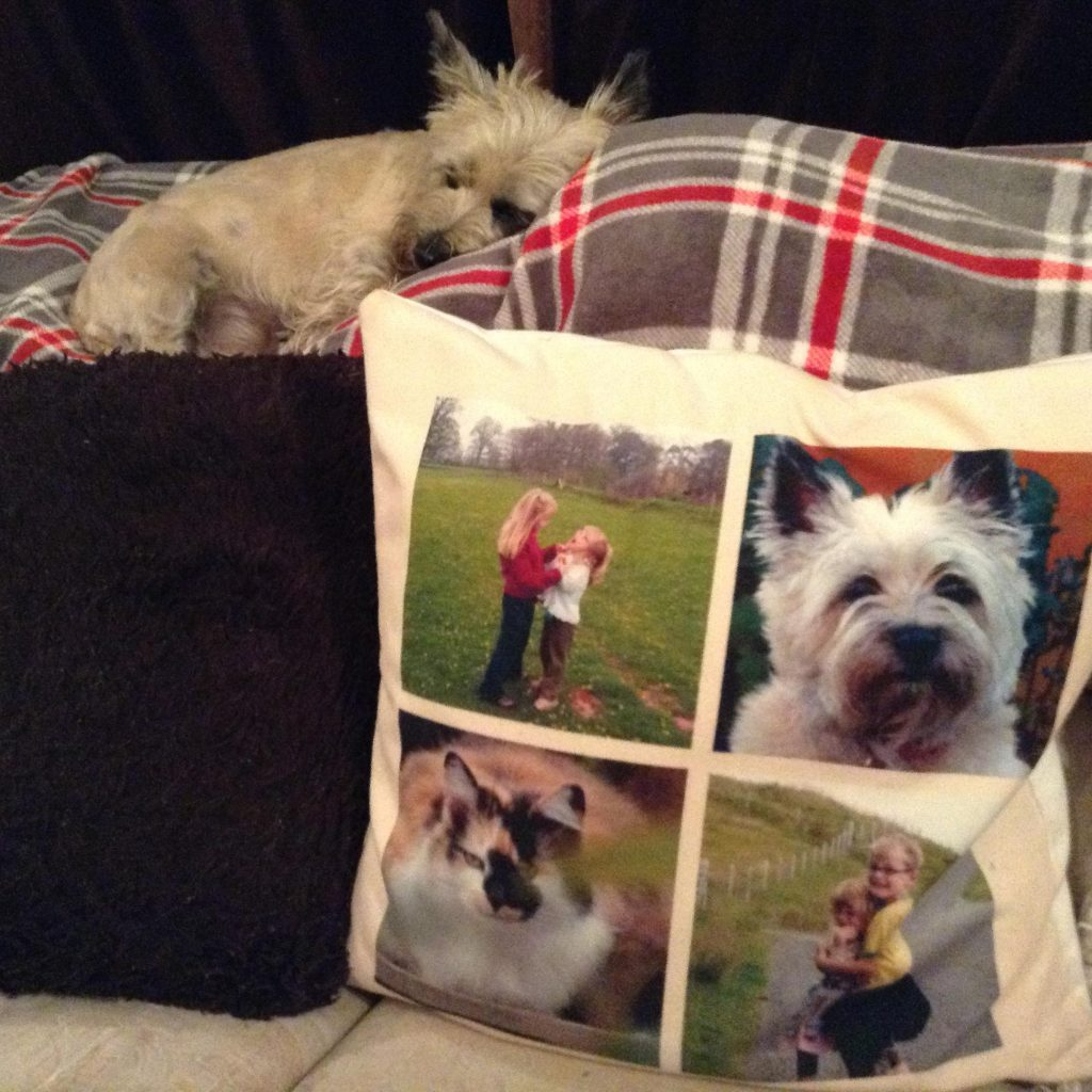personalised photo cushion with images of children, cat and dog