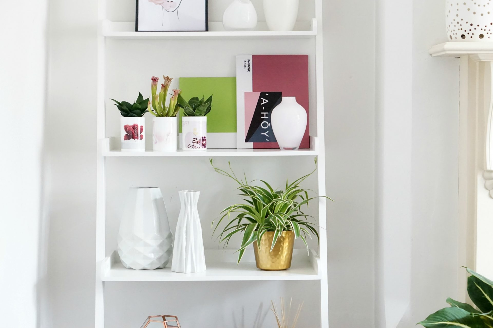 white shelf containing mugs with succulents, Pantone photo books vases and plants.