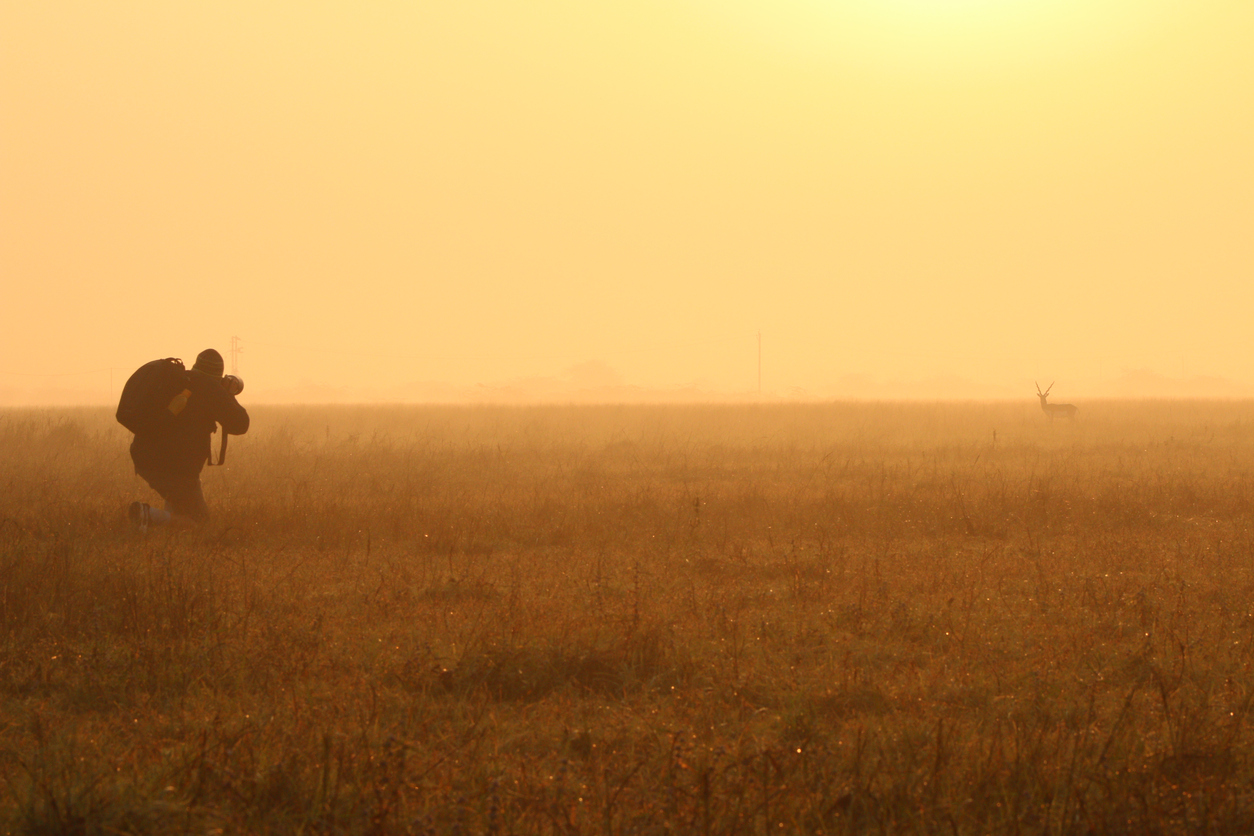 A photographer in the open grass land trying to shoot a black buck.