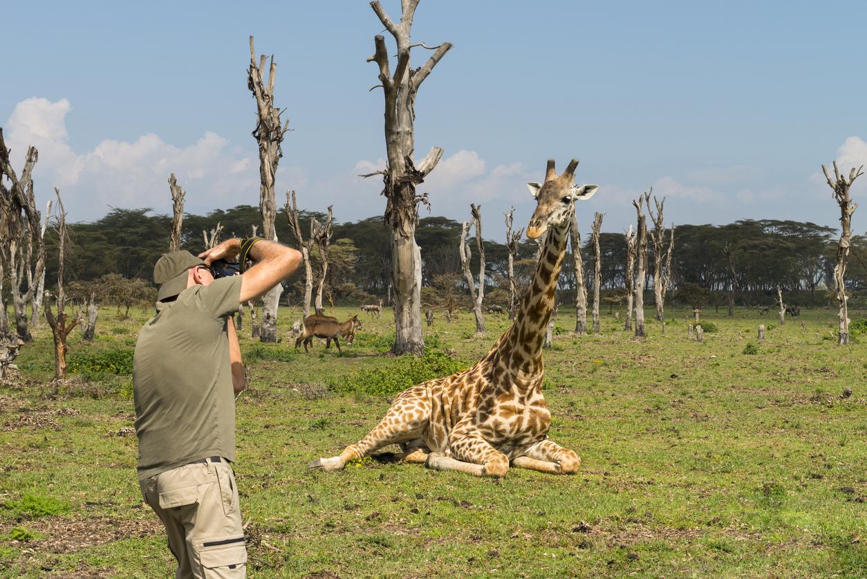 Seniors, man capturing wildlife, photographing giraffe in Africa