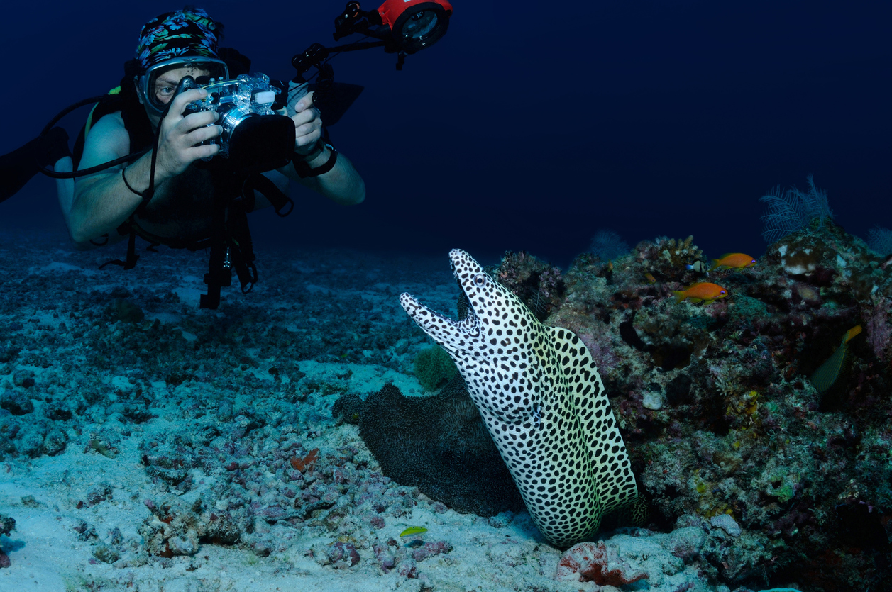 Diver and moray eel